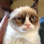 grumpy-cat-04